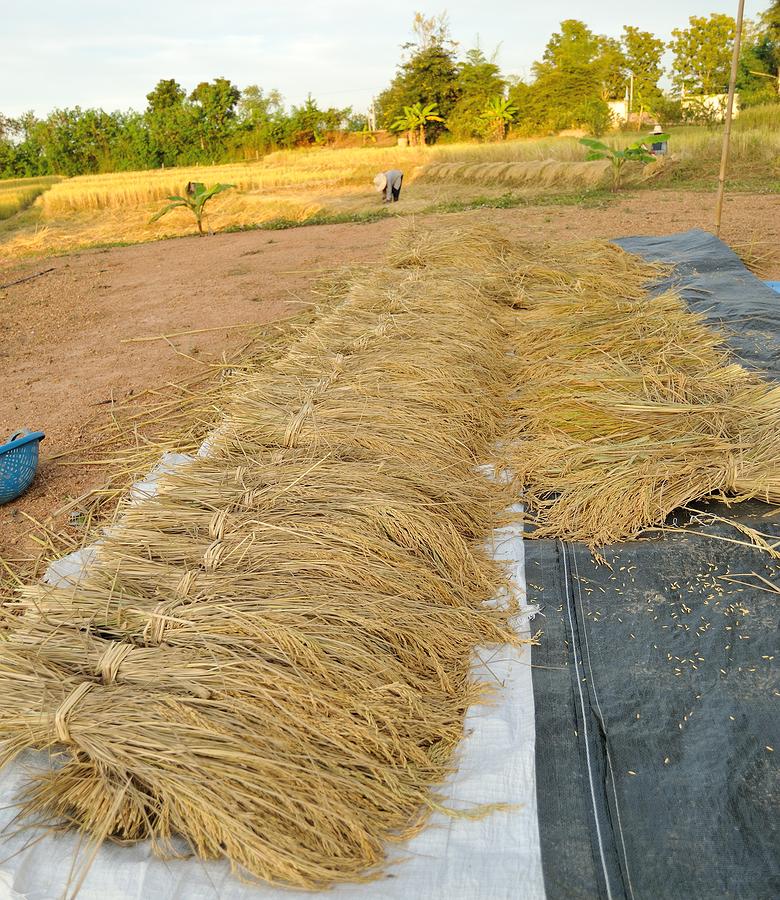 single grain moisture meter for harvest time