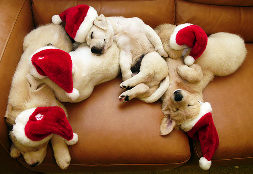 dogs resting at christmas