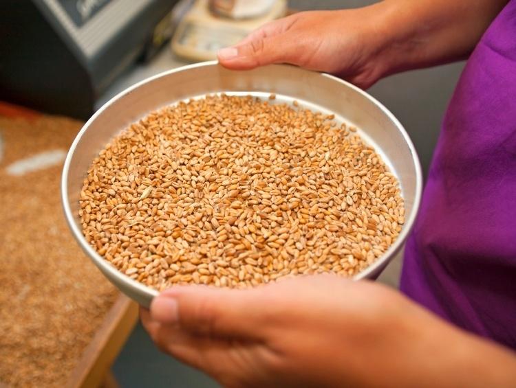 Wheat_moisture_sample-992282-edited