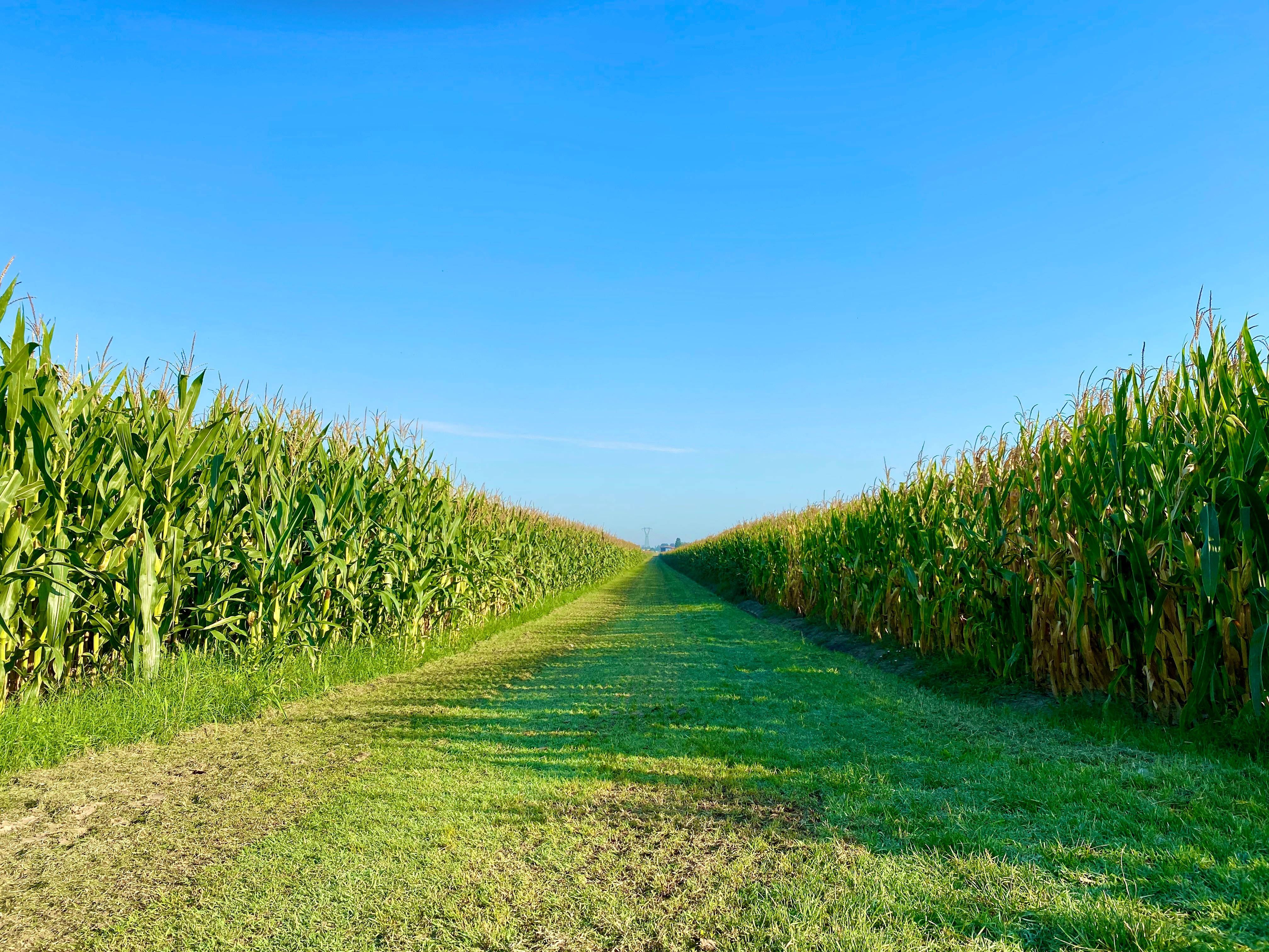 Predicting Corn Maturity with Moisture Levels