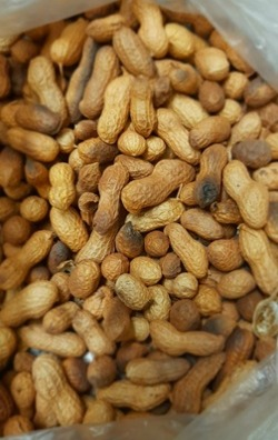Shell and All: Measuring Peanuts' Moisture Levels